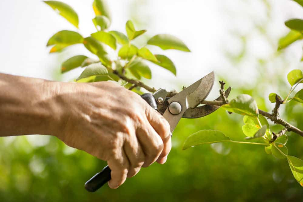 Pexio Bypass Pruning Shears