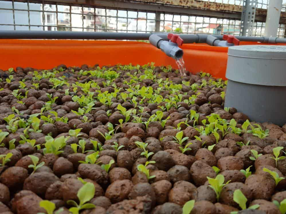 Advantages of Home Aquaponics