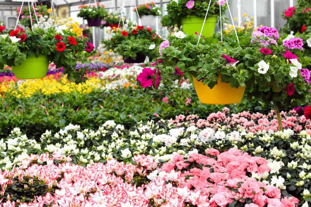 Flower House SpringHouse Greenhouse Review