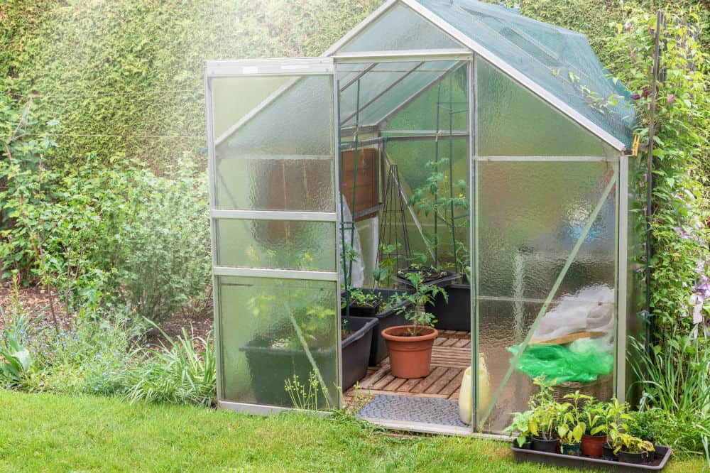 How to Use a Greenhouse to Its Fullest Potential 3