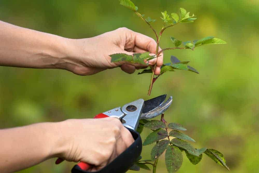 Best Pruning Shears for Easy Plant Clipping