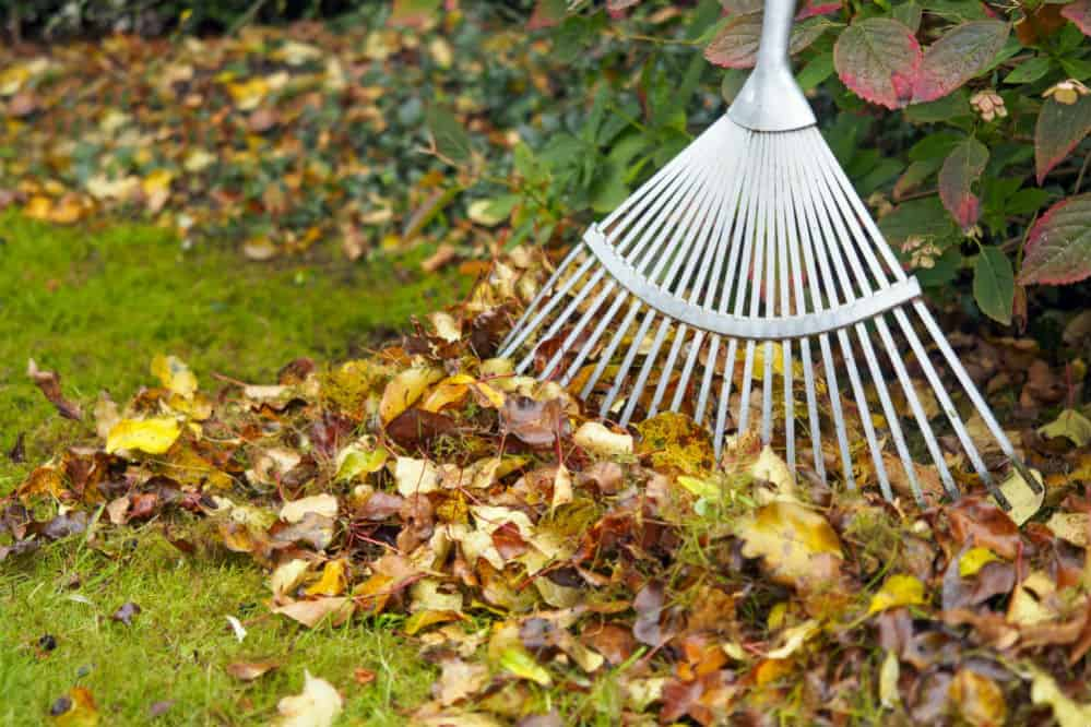 Best Rake: A Simple Tool for the Perfect Yard