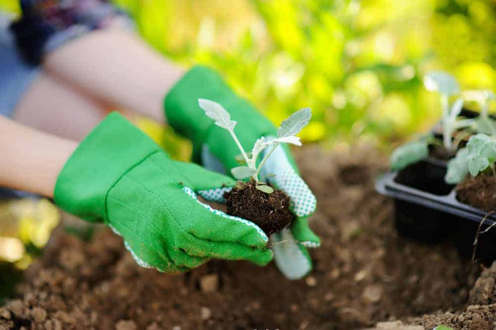 Best Gardening Gloves for Every Need