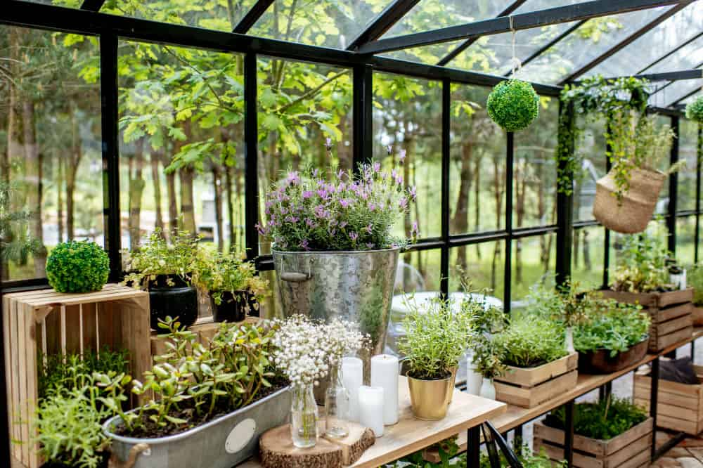 Best Greenhouses for Indoor and Outdoor Use